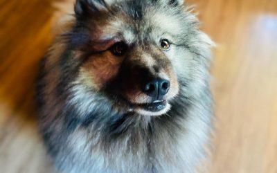 comment adopter un chien