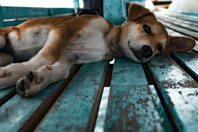 Travailler avec les chiens errants en Inde