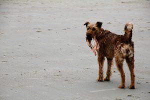 dog-2010616_960_720
