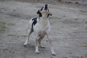 dog-248260_960_720