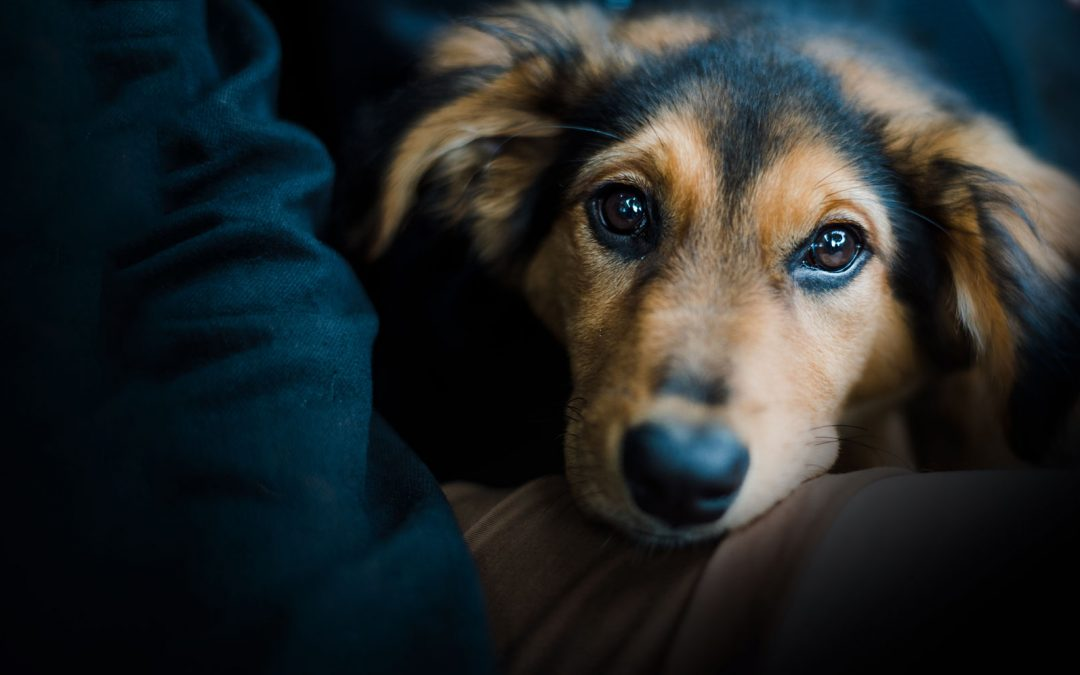 Les problèmes de comportement chez le chien