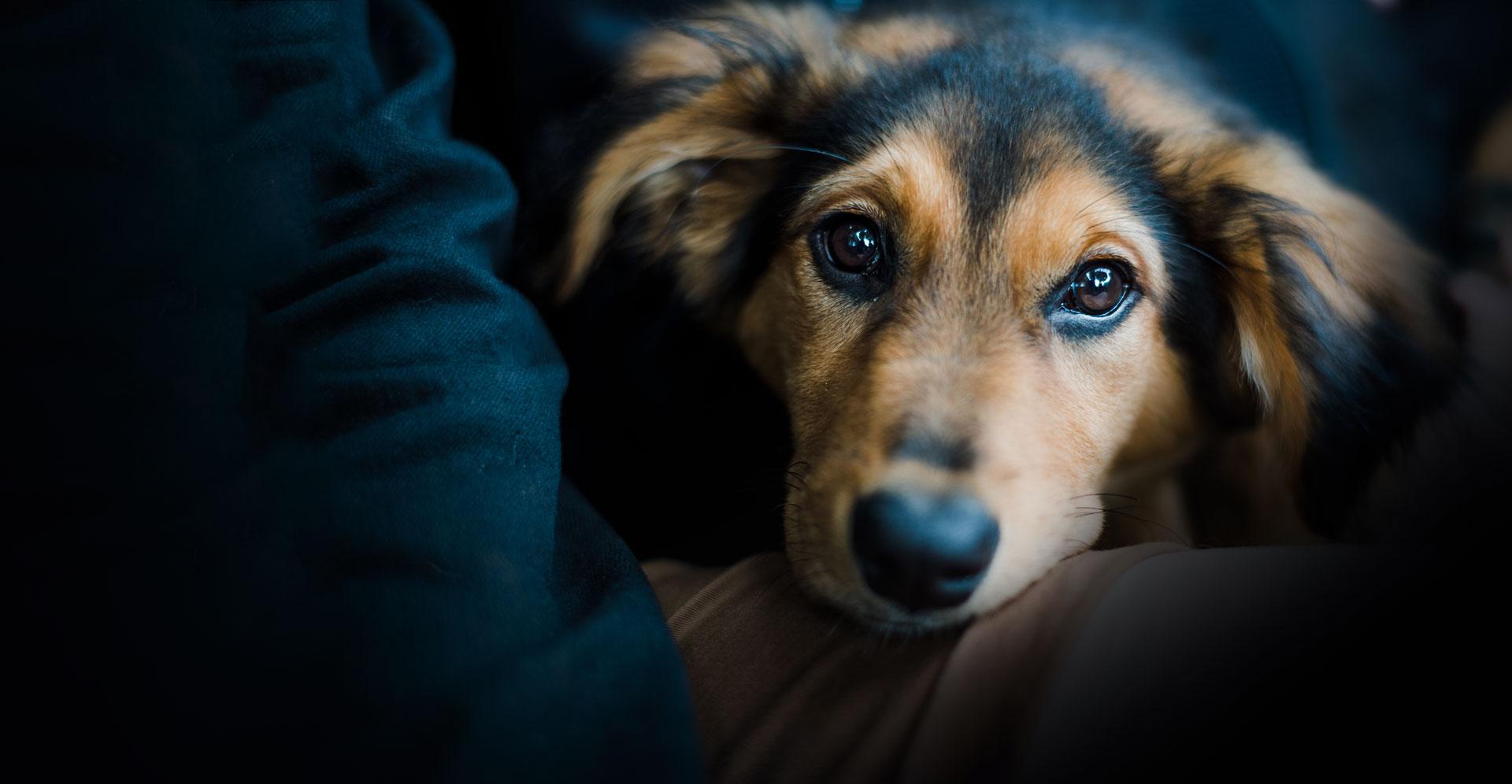 Et si on adoptait un deuxième chien ?