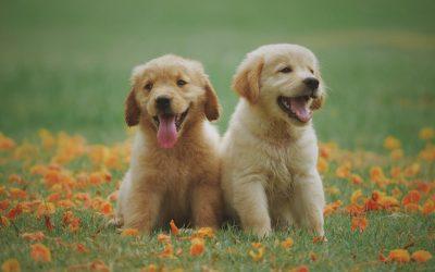 Comment choisir son chiot ou son chien