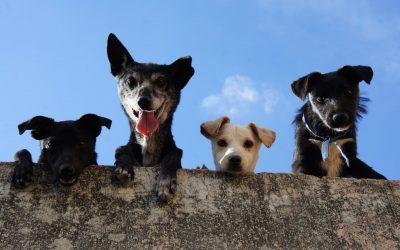 quelle race de chien choisir